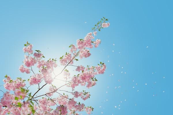 歓送迎会、花見会、入学・就職祝い、ひな祭り